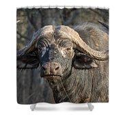 Big Old Bull Shower Curtain