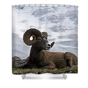 Big Ram Shower Curtain