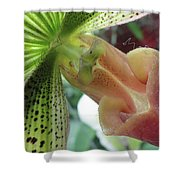 Big Time Sensuality Shower Curtain