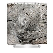 Big Tree 6 Shower Curtain