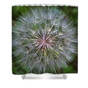 Big Wish Shower Curtain