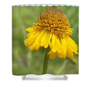 Bigelow Shower Curtain