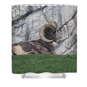 Bighorn Sheep Shower Curtain