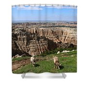 Bighorn Sheeps At Sage Creek Shower Curtain