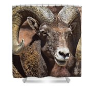Bighorn Shower Curtain