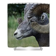 Bighorned Ram Shower Curtain