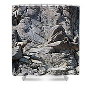 Bighorns Romantic Stare Shower Curtain