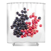 Bilberries And Cowberries Isolated Shower Curtain