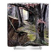 Bilbow's Path Shower Curtain