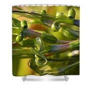 Billbergia Nutans Shower Curtain