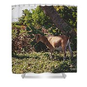 Billy Goat Shower Curtain