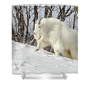 Billy Goat On The Move Shower Curtain