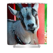 Billy Shower Curtain