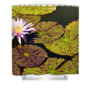 Biltmore Lily  Shower Curtain