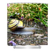 Biological Drive Cleaner Shower Curtain