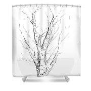 Birch Abstraction Study Shower Curtain