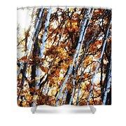 Birch And Oak And Sun Shower Curtain