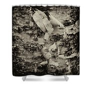 Birch Bark Detail Monotone Img_6361 Shower Curtain