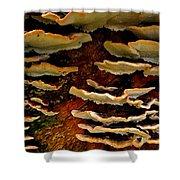 Birch Bracket Fungus Shower Curtain