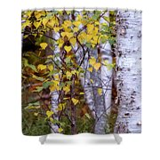Birch In Autumn Shower Curtain