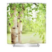 Birch In Spring Shower Curtain