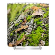 Birch Log Shower Curtain