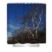 Birch On A Cliff  Shower Curtain