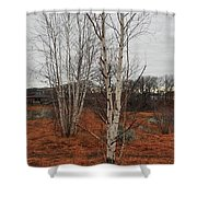 Birch On A Rocky Hill  Shower Curtain