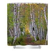 Birch Path Shower Curtain
