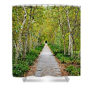 Birch Pathway Perspective Shower Curtain