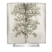 Birch Tree Shower Curtain by Charles Harden