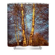 Birch Tree In Golden Hour Shower Curtain