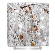 Frost Birch  Shower Curtain