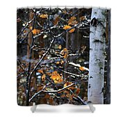 Birch Tree In Winter Shower Curtain
