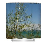 Birch Tree Over Lake Shower Curtain