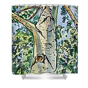 Birch Tree Sketchbook Project Down My Street Shower Curtain by Irina Sztukowski