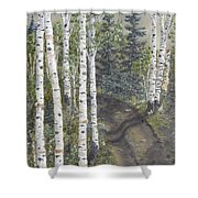 Birch Trees Along Kennys Road  2 Shower Curtain
