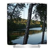 Birch Trees Along The Lake Shower Curtain