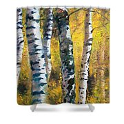 Birch Trees In Golden Fall Shower Curtain