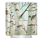 Birch Trees In Late Autumn Shower Curtain