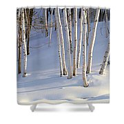 Birch Trees In The Snow, South Shower Curtain