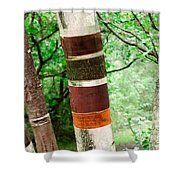 Birch Wood Tree  Shower Curtain
