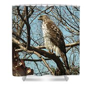 Birched Cooper 2 Shower Curtain