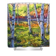 Birches 01 Shower Curtain