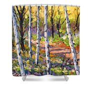 Birches 02 Shower Curtain