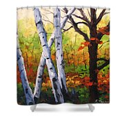 Birches 05 Shower Curtain