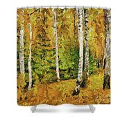 Birches And Spruces Shower Curtain