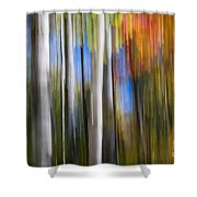 Birches In Autumn Forest Shower Curtain