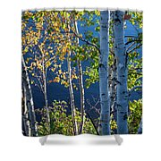 Birches On Lake Shore Shower Curtain