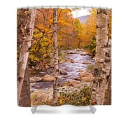 Birches On The Kancamagus Highway Shower Curtain